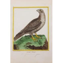 Oiseau - LE GERFAULT...
