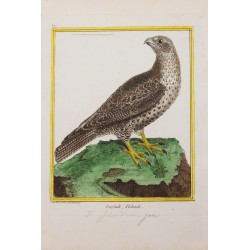 Pájaro - LE GERFAULT...