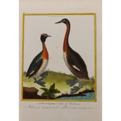 Oiseau -  GERBE DE CAYENNE...