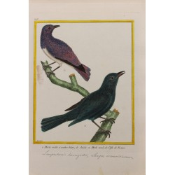 Pájaro - MERLE VIOLET A...