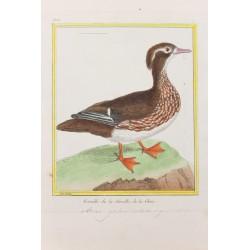Oiseau - FEMELLE DE LA...