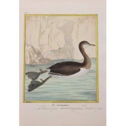 Oiseau - LE CASTAGNEUX N° 905