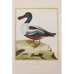 Pájaro - LE SOUCHET N° 971