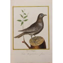 Oiseau - LE MERLE DE...