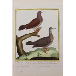 Bird -  PETITE TOURTERELLE...