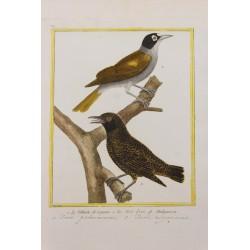 Oiseau - LE PALMISTE DE...