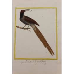 Pájaro - PROMEROPS, DE LA...