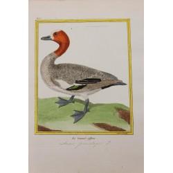 Oiseau - LE CANARD SIFFLEUR...
