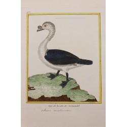 Oiseau - OYE DE LA COTE DE...