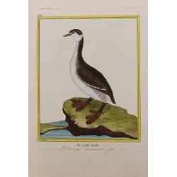 Oiseau - LE PETIT GREBE N° 942