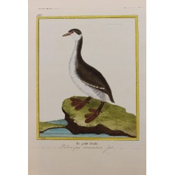 Pájaro - LE PETIT GREBE N° 942