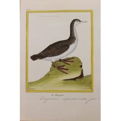 Pájaro - LE PLONGEON N° 992