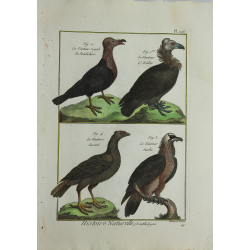 BIRDS - Vautour -...