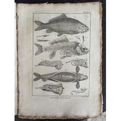 Ictiología (pescado) -...