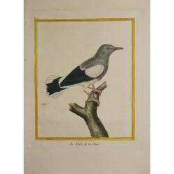 Oiseau - LE KINK de la...