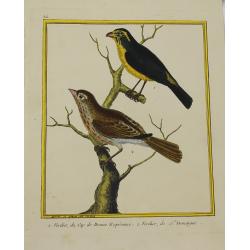 Pájaro - Verdier du Cap de...