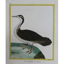 Oiseau - LE GREBIFOULQUE DE...