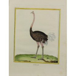 Bird - L'Autruche N° 457