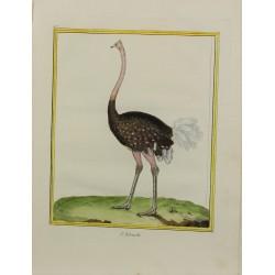 Oiseau - L'Autruche N° 457
