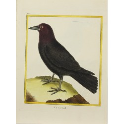 Oiseau - La Corneille N° 483