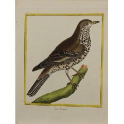 Pájaro - La Drenne N° 489