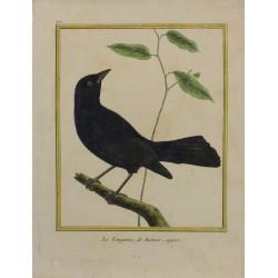 Oiseau - Le Tangavio de...