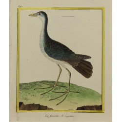 Oiseau - La favorite de...