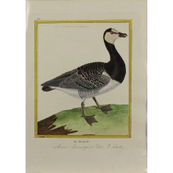 Oiseau - La Bernache N° 855