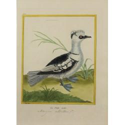 Oiseau - La Piette mâle N° 449