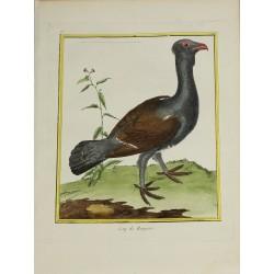 Pájaro - Coq de Bruyere N° 73
