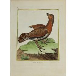 Pájaro - Poule de Bruyere...