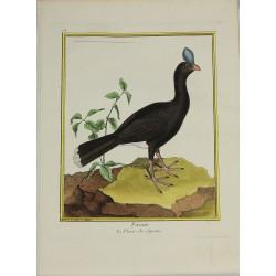 Bird - Faisan, le Pierre de...