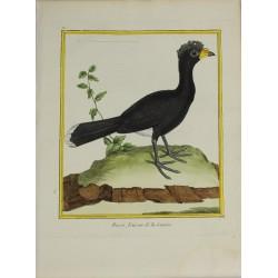 Oiseau - Hocco, Faisan de...