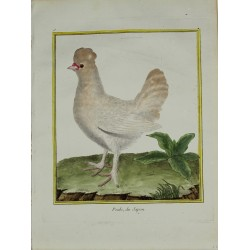 Oiseau - La Poule du Japon...