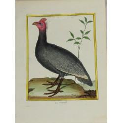 Oiseau - La Peintade N° 108