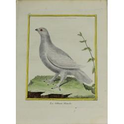 Bird -  La Gélinote blanche...