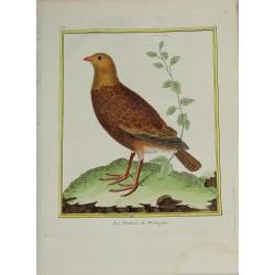 Pájaro - La Perdrix de...