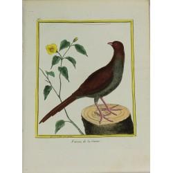 Pájaro -Faisan de la Guiane...