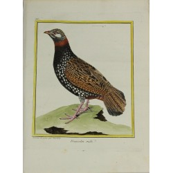 Bird - Francolin mâle N° 147