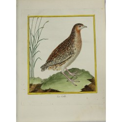 Oiseau - La Caille N° 170