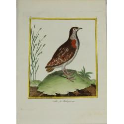 Pájaro - La Caille de...