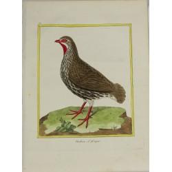 Pájaro - Perdrix d'Afrique...