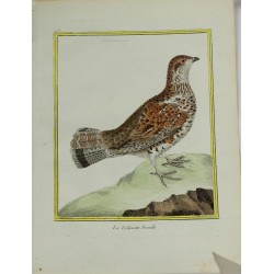Oiseau - La Gélinote...