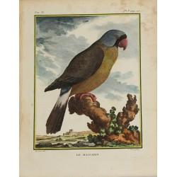 Pájaro - Loro - El Mascarin...