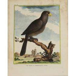 Pájaro - Loro - El Vasa o...