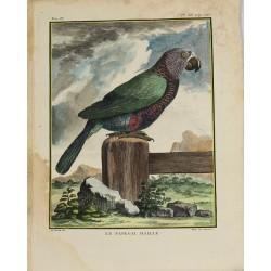 Bird - Parrot - Le Papegai...