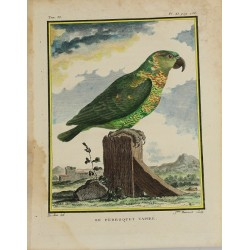 Oiseau - Perroquet -...