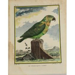 Pájaro - Loro - Loro Tapiré...