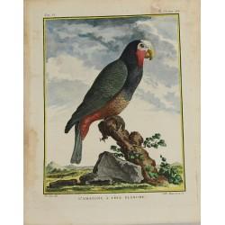 Pájaro - Loro - Amazona de...