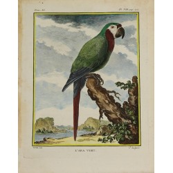 Bird - Parrot - Green Macaw...